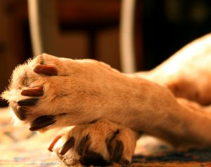 What Your Dog's Paws Tell You - Help 'Em Up®