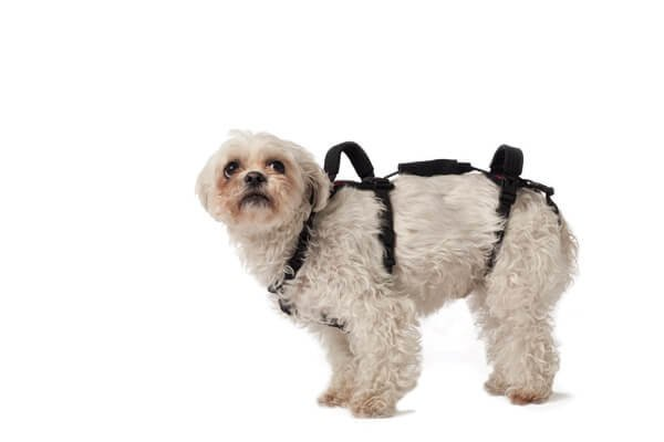 X Small Dog Harness Help Em Up