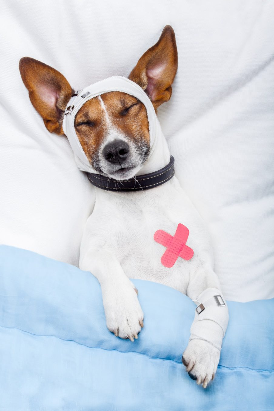 How to Recognize If Your Older Dog Is In Pain - Help 'Em Up®