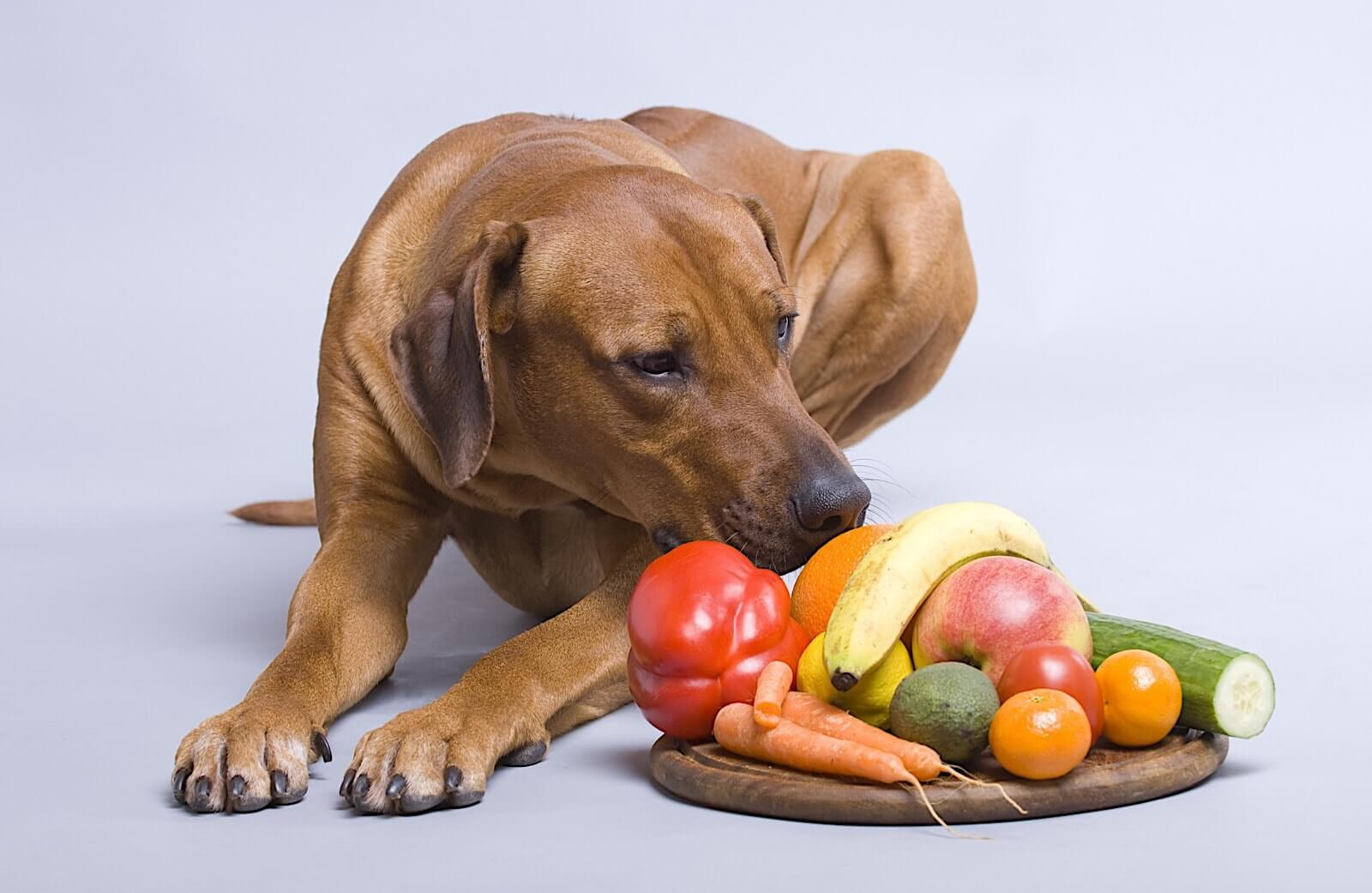 картинка еда для животных красивая