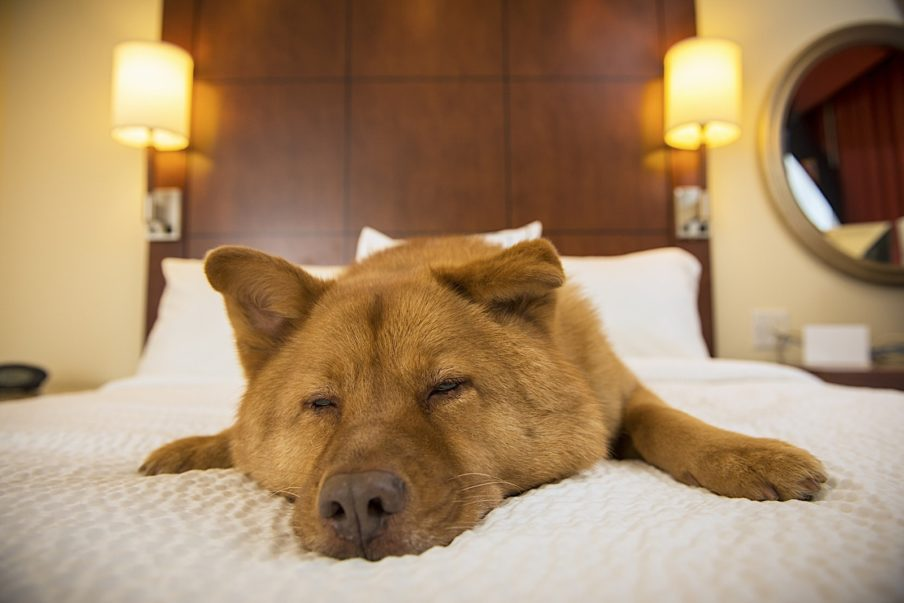Tips For Staying In a Hotel With Your Dog – Help 'Em Up®
