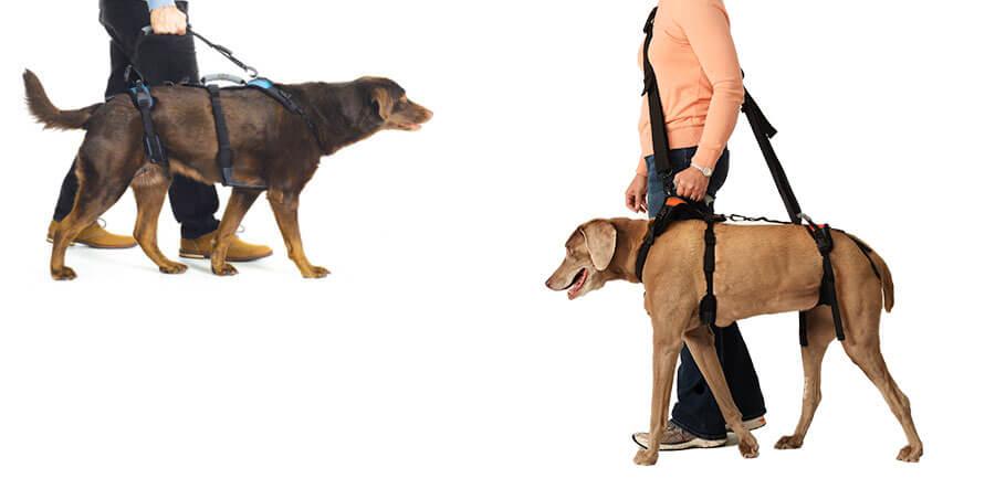 Walking Leash/Shoulder Strap