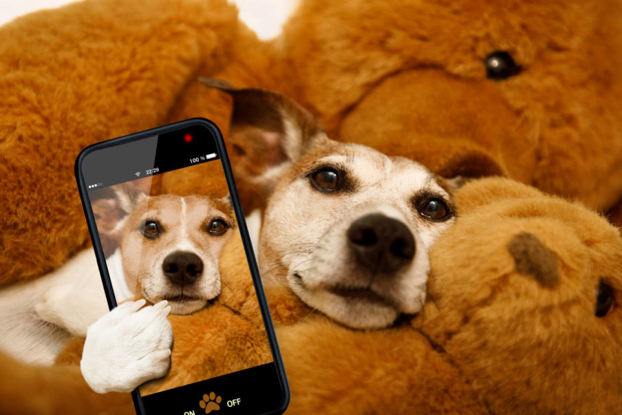 Your Cell Phone Can Keep Your Dog Healthy – Help 'Em Up®