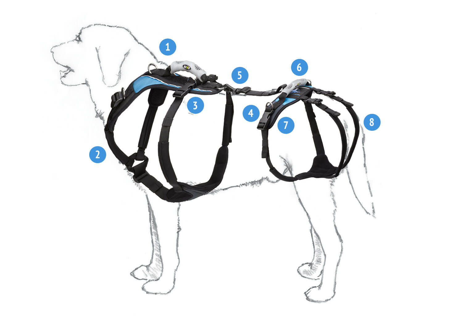 The Help 'Em Up Harness with Hip Lift - Fitting Illustration