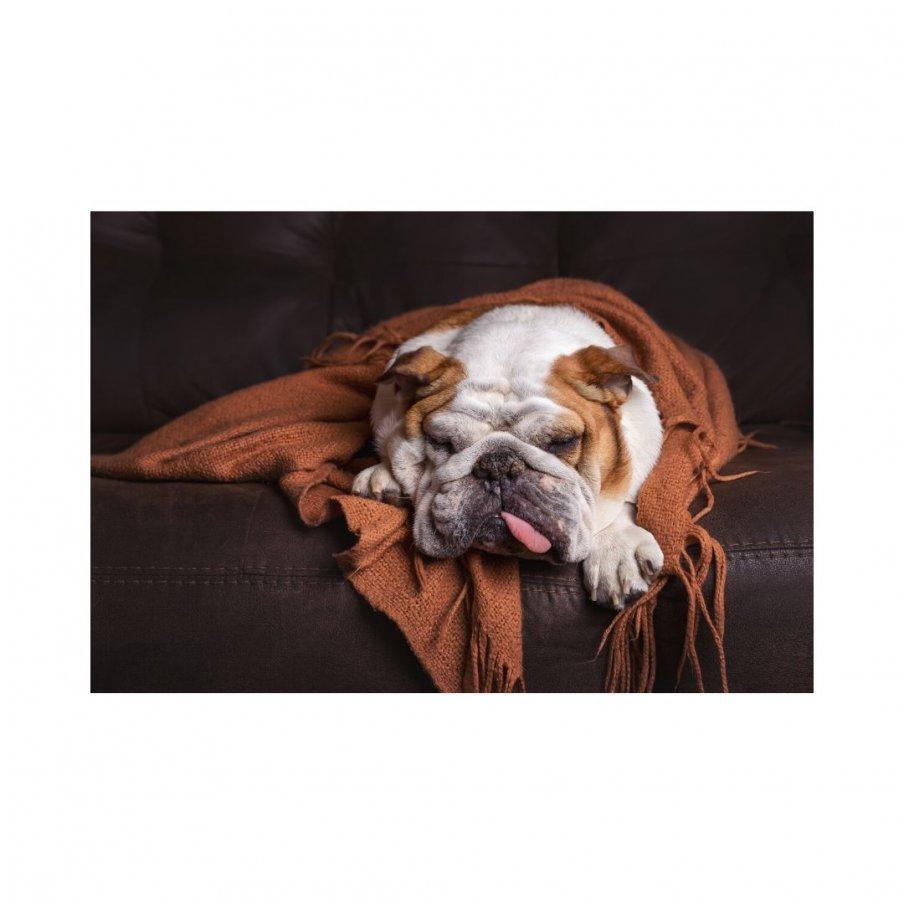 #dogcold