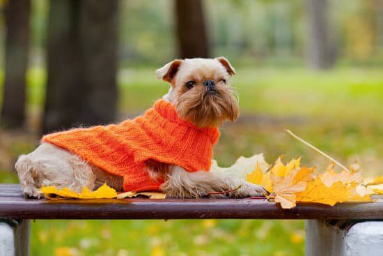 #autumn tips #senior dogs